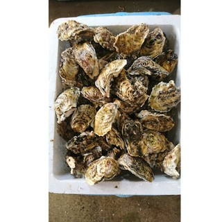 パゲさん専用 牡蠣 4.5キロ(魚介)