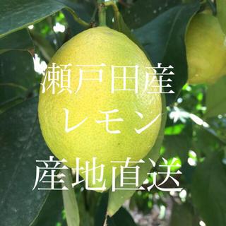 広島 瀬戸田産 レモン1.2kg 送料込み◎(フルーツ)