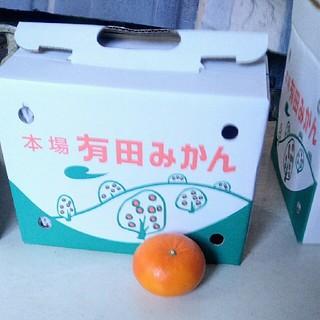 麗紅 レイコウ M 18個 送料無料 有田みかん 和歌山県産(フルーツ)