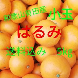 はるみ🍊小玉🍊キズあり家庭用🍊5㎏🍊送料込み(フルーツ)
