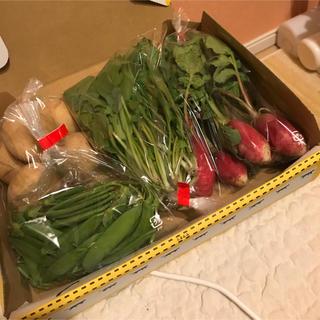採れたて野菜3種と安芸津じゃがいもの詰め合わせ コンパクトBOX(野菜)