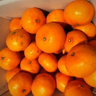 柑橘、みかんの大トロ★愛媛県産せとか‼︎厳選家庭用5kg箱(フルーツ)