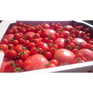 訳あり ソムリエトマト4kg16玉から30玉(野菜)