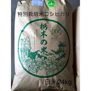 栃木県産コシヒカリ【特別栽培米】白米24kg(米/穀物)