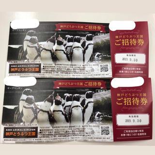 神戸どうぶつ王国 入場券(動物園)