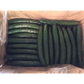 きゅうりA品4.5kg程度、宮崎県西都市産、農家直送(野菜)