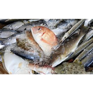 対馬の雑魚三昧干物セット(2kg)(魚介)