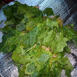 ほうれん草1キロ(野菜)