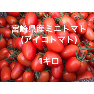 宮崎県産ミニトマト1キロ(野菜)