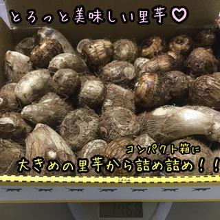 【翌日発送】☆無農薬☆ 里芋 コンパクト箱詰め詰め 1.5キロ(箱の重さ込み)(野菜)