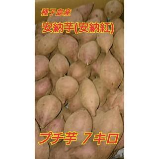 種子島産安納芋(安納紅)プチ芋7キロ(野菜)