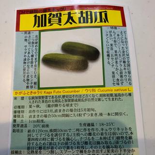 ★送料込★加賀野菜「加賀太胡瓜」の種10粒(野菜)