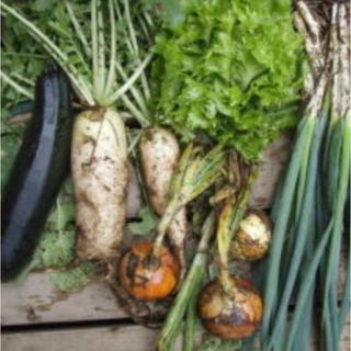 採れたて新鮮野菜 無農薬野菜12品メガ盛り野菜 即配送野菜 朝採れ直送(野菜)