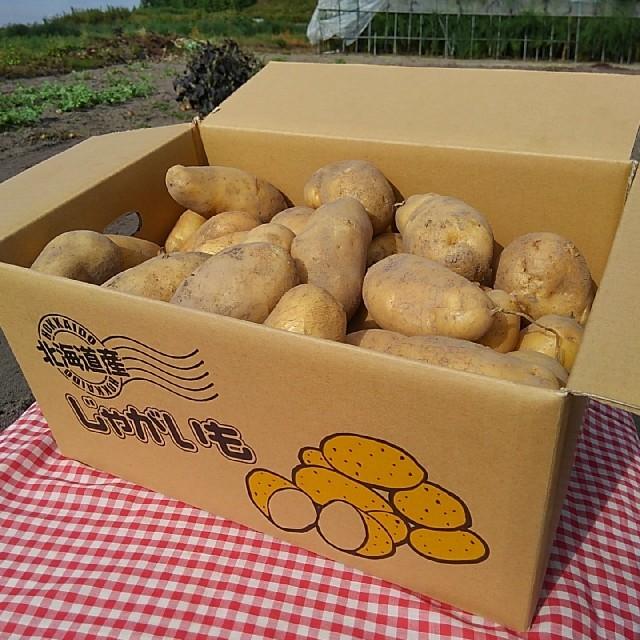 越冬じゃがいも メークイン 食品/飲料/酒の食品(野菜)の商品写真