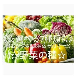 ☆野菜の種☆【お得ダネ!送料込555円】(^ー^)《選べる7種類》!!(野菜)