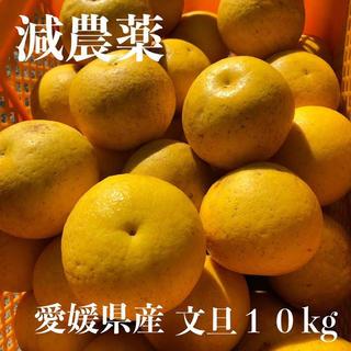 愛媛産 文旦 10kg 混合サイズ(フルーツ)