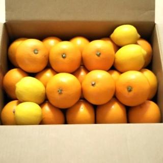 広島産 八朔はっさく(+広島レモン4個) 5キロ(フルーツ)