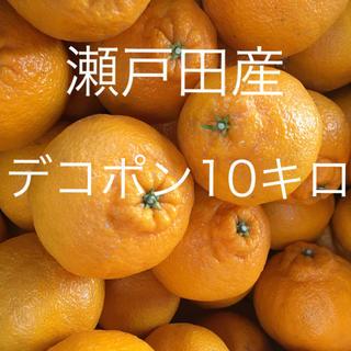 【産地直送】広島/瀬戸田産 デコポン 10kg 送料込◎(フルーツ)