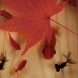 送料0円 アクリルアート ヘッドホン金魚 「楽もみじ」こだわりの純日本製(絵画/タペストリー)