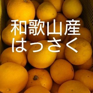 和歌山産 普通はっさく 10キロ 送料込み(フルーツ)