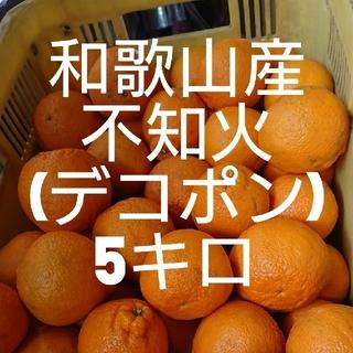 和歌山産 不知火(デコポン) 5キロ 送料込み(フルーツ)