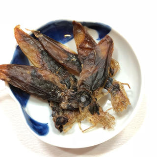 新物入りました! 山陰産ホタルイカの生干物(乾物)