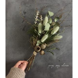 若草色のラグラスと雪柳の芽吹き ベルギーナッツを添え ドライフラワー スワッグ (ドライフラワー)