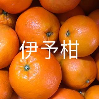 いよかん  5キロ(フルーツ)