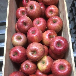 残りわずか!青森県産りんご 葉とらずふじ 5キロ(フルーツ)