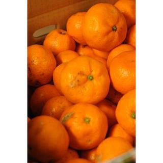 蔵出しみかん5キロ(家庭用) 和歌山県から農園直送!(フルーツ)