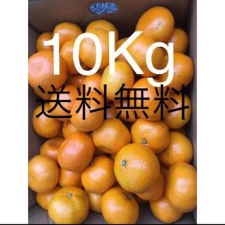 和歌山県 傷あり訳ありみかん約10kg(フルーツ)
