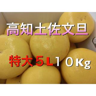高知土佐文旦(貴重な特大5Lサイズ) 10kg  家庭用(フルーツ)