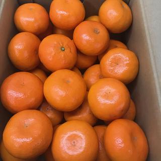 熊本産  麗紅5キロ(フルーツ)