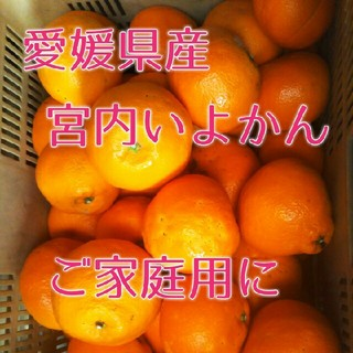 ✴愛媛県産 宮内いよかん 【わけあり】10キロ(フルーツ)
