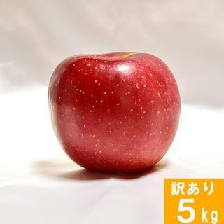 【訳あり】りんご サンふじ 長野県産 5kg 家庭用 徳用 葉取らず(フルーツ)