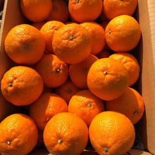 紀州特産 不知火(デコポン)5kg(フルーツ)