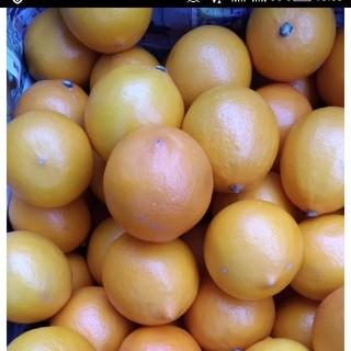 マイヤーレモン 国産レモン 5kg 2級品 (フルーツ)