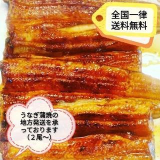 ひろわ様 うなぎ蒲焼き2尾(魚介)