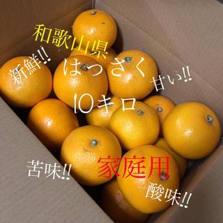 早生 はっさく 10キロ ミックス 家庭用 ⚠︎訳あり お得品!!(フルーツ)