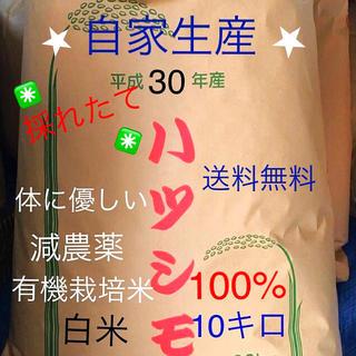 ✳️新米✳️30年度ハツシモ【白米】10キロ