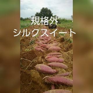 規格外シルクスイート8キロ(野菜)