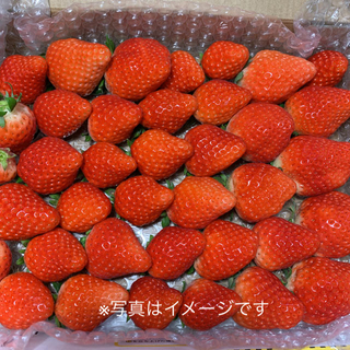 パツパツ苺♡さがほのか●いちごイチゴ(フルーツ)