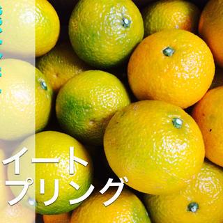 人気上昇中!!熊本スイートスプリング約9キロ(フルーツ)