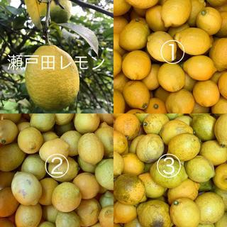 瀬戸田レモン  2.5キロ  綺麗目(フルーツ)