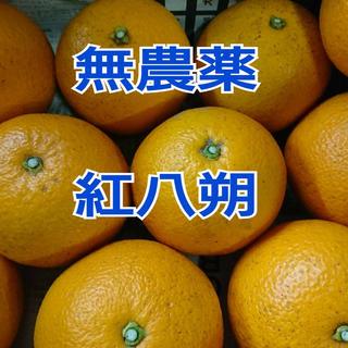 紅八朔(フルーツ)