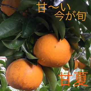 甘夏 約7㎏の17〜18個前後  無農薬(フルーツ)