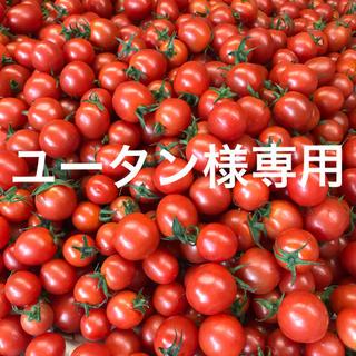 ユータン様専用 ミニトマト2kg(野菜)