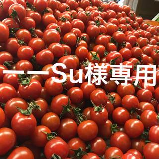 ーーSu様専用 ミニトマト2kg(野菜)