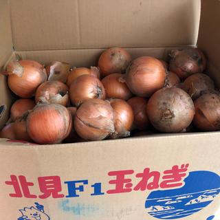 大人気!玉ねぎ生産量日本一 北海道北見産 20キロ