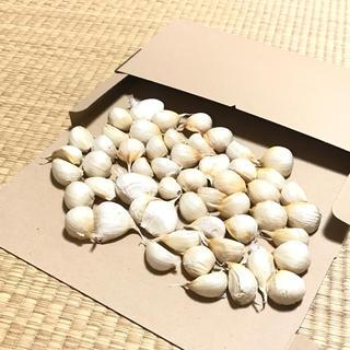 青森県南産 バラにんにく 400g 今年度分終盤在庫残り僅か